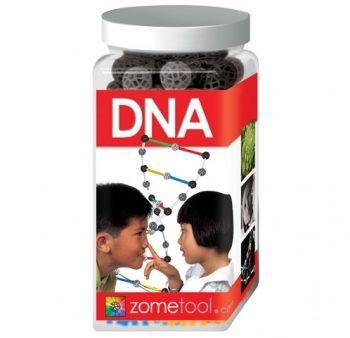 Zometool DNA Model
